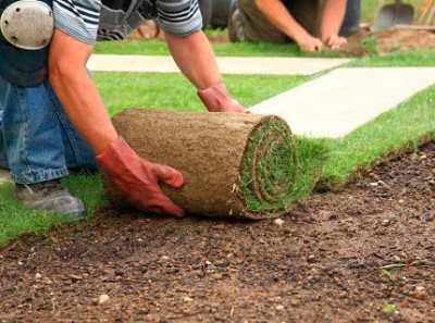 Устройство газона или как обрадовать уставший глаз городского жителя?